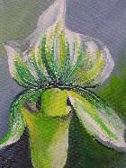 Grün  - weiße Lilie